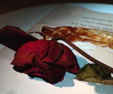 -crushed rose 600